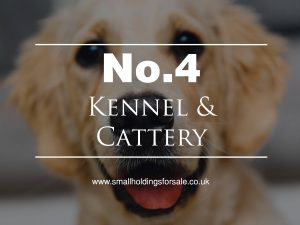 Kennel and Cattery Smallholding